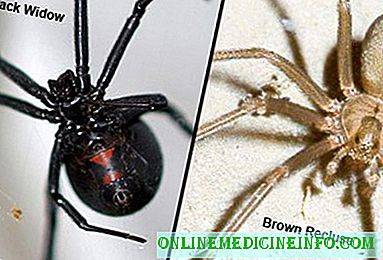 Black Widow vs Brown Recluse Spiders, June 2019
